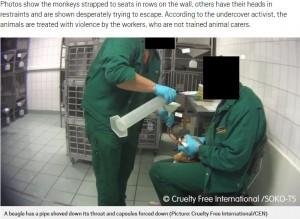 口からチューブを挿入されたビーグル犬(画像は『Metro 2019年10月15日付「Monkeys scream out in pain in secret footage recorded at 'German lab'」(Picture: Cruelty Free International/CEN)』のスクリーンショット)