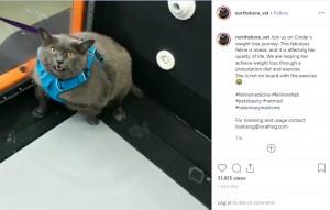【海外発!Breaking News】肥満ネコ、トレッドミルでエクササイズも「早く止めて~」(米)<動画あり>