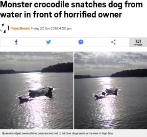 飼い主の目の前で犬がワニに襲われる瞬間が捉えられる(豪)<動画あり>