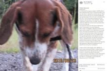【海外発!Breaking News】生きたまま皮の75%を剥がされた犬 報奨金85万円超で情報提供呼びかけ(米)