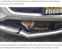 【海外発!Breaking News】衝突で車のバンパーにはまった犬 45分間ドライブも奇跡的に助かる(米)
