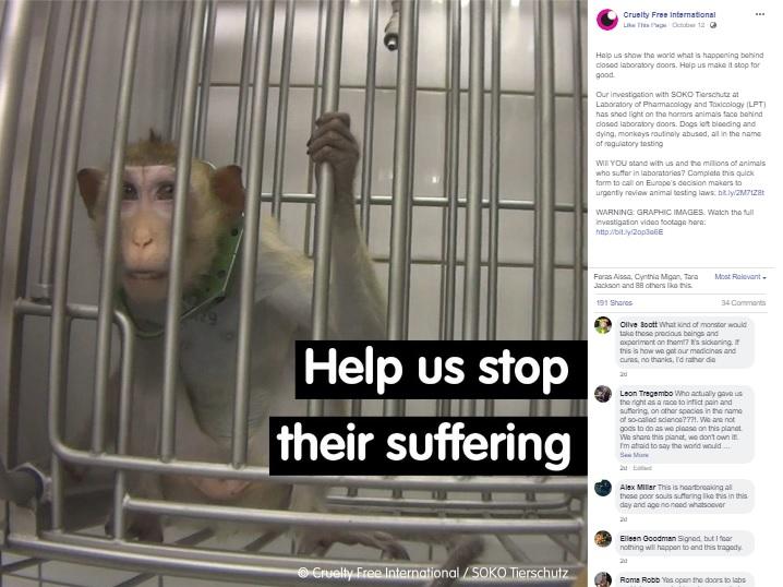 小さな檻に入れられた猿(画像は『Cruelty Free International 2019年10月12日付Facebook「Help us show the world what is happening behind closed laboratory doors. Help us make it stop for good.」(Cruelty Free International/SOKO Tierschutz)』のスクリーンショット)