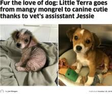 【海外発!Breaking News】疥癬により全身の毛を失った犬 新しい飼い主のもとで元気に回復(英)