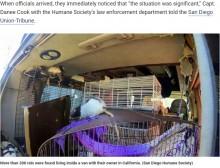 【海外発!Breaking News】2匹のネズミが300匹以上に 車の中で飼っていた女性が助けを求める(米)