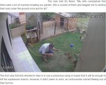 【海外発!Breaking News】ゴキブリを駆除しようとした男性、庭が吹っ飛び呆然(ブラジル)<動画あり>