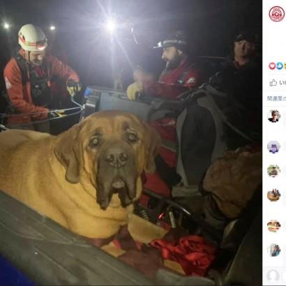 【海外発!Breaking News】ハイキング中に疲れ果てた体重86キロの犬 救助隊の担架で下山(米)<動画あり>