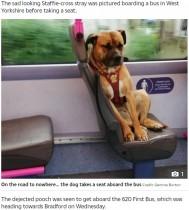 【海外発!Breaking News】バスに乗ってきた迷い犬、その寂しげな表情に心打たれる(英)