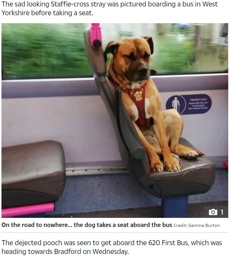 悲しげな表情でバスに乗る犬(画像は『The Sun 2019年10月19日付「POOR POOCH No owner comes forward for heartbroken dog who boarded bus alone in West Yorkshire」(Credit: Gemma Burton)』のスクリーンショット)