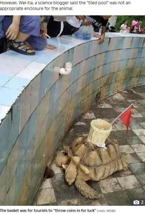 """【海外発!Breaking News】硬貨を投げ入れる""""カゴ""""がカメの甲羅に 中国の動物園に非難殺到"""