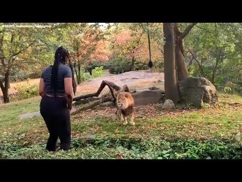 ライオンの目の前で挑発するかのように踊る女性(画像は『Eyewitness News ABC7NY 2019年10月1日公開 YouTube「Woman sneaks into Bronx Zoo's lion den」』のサムネイル)