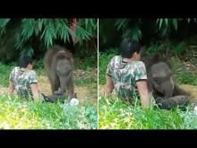 【海外発!Breaking News】野生の群れに馴染めなかった子象、飼育員の膝の上で安心して眠る(タイ)<動画あり>