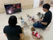 【エンタがビタミン♪】犬もテレビに感動していることが明らかに ハッピーになる海外ドラマ1位は『HAWAII FIVE-0』の「忠犬エディ」!