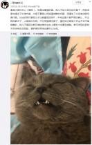 【海外発!Breaking News】ペットホテルに預けられた雄猫、一晩で5匹と交尾し点滴を受ける(中国)