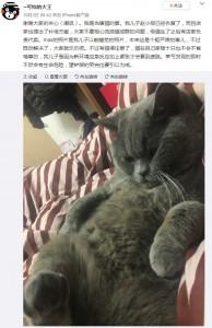 点滴を受ける羽目になったシャウピ(画像は『--可怕的大王 2019年10月3日付 微博「谢谢大家的关心(嘲讽)。我是当事猫的爹。」』のスクリーンショット)