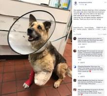 【海外発!Breaking News】餌も与えられず庭に繋がれたままの犬、空腹で前足を噛んで失う(米)