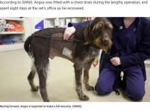 【海外発!Breaking News】身体に鉄の棒が刺さった犬、急所を外れ奇跡的に助かる(英)