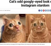 【海外発!Breaking News】まんまるな目のネコがSNSで大人気も「病気では?」心配する声(米)