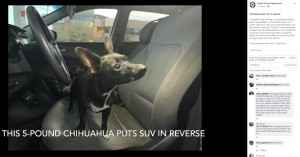 【海外発!Breaking News】あわや大事故! 給油中にチワワが車を後退させる(米)<動画あり>