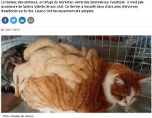 【海外発!Breaking News】ドレッドヘアのように毛が絡まってしまった猫、新たな飼い主が見つかる(仏)