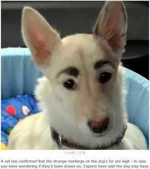"""【海外発!Breaking News】立派な""""眉毛""""を持つ迷い犬、すぐに新しい家族が見つかる(露)<動画あり>"""