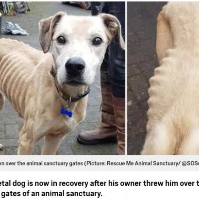 【海外発!Breaking News】ほぼ骨と皮の犬、動物保護施設の門に放り投げられる(英)