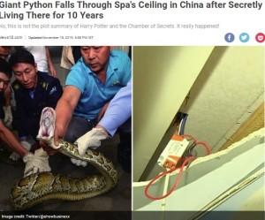 """【海外発!Breaking News】スパに10年棲みついた""""伝説の巨大ヘビ""""が捕獲される(中国)"""