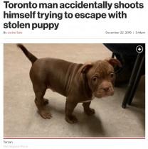 【海外発!Breaking News】子犬を盗もうとした男、誤って自分に発砲し身動き取れず逮捕(カナダ)