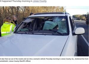 【海外発!Breaking News】鹿との衝突事故が急増 撥ねた鹿がフロントガラスを突き破り車内に飛び込むケースも(米)