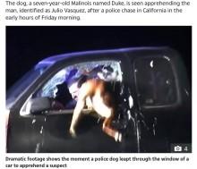"""【海外発!Breaking News】車に立てこもった容疑者を降伏させた""""ヒーロー""""警察犬(米)<動画あり>"""