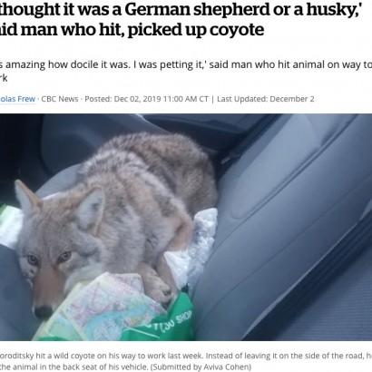 【海外発!Breaking News】運転中に犬をはねてしまった男性、救助し保護するも後にコヨーテと判明(カナダ)