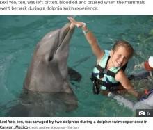 【海外発!Breaking News】ツアーで一緒に泳いでいたイルカに海中に引きずり込まれた10歳女児(メキシコ)