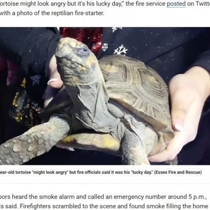 【海外発!Breaking News】赤外線ランプを倒し火事を起こしたカメ、救助されるも不機嫌な顔(英)