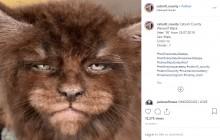 【海外発!Breaking News】「人間のような顔が好き」自分好みのネコを作り出すブリーダー(露)