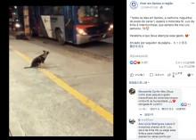 【海外発!Breaking News】停留所で毎晩、同じバスの運転手を待つ犬(ブラジル)<動画あり>