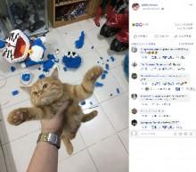 【海外発!Breaking News】1週間かけて完成したブロックの「ドラえもん」 一瞬でバラバラにした子猫が人気(タイ)