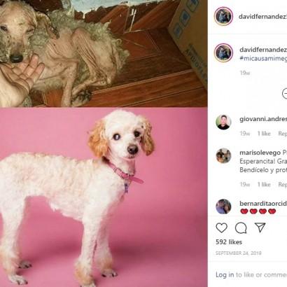 【海外発!Breaking News】保護された犬のビフォー・アフター 「優しい愛のケアが大切」と26歳男性(チリ)