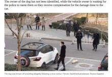 【海外発!Breaking News】「ペットがウイルスを拡散」中国で虚偽報道 建物上階から犬や猫が投げ捨てられる