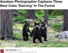 【海外発!Breaking News】3頭の子グマが輪になってダンス!? 撮影者も「人間の子供のよう」(フィンランド)