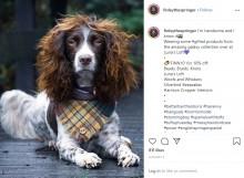【海外発!Breaking News】まるで「クイーン」のブライアン・メイ!? ロックスターのような犬がSNSで大人気(英)