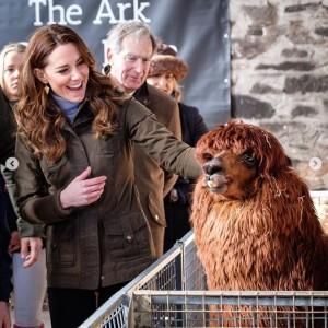 動物との触れ合いを楽しむキャサリン妃(画像は『Kensington Palace 2020年2月12日付Instagram「Today The Duchess of Cambridge has taken her UK-wide #5BigQuestions survey to Northern Ireland and Scotland, starting with a visit to @TheArkOpenFarm in County Down, Northern Ireland.」』のスクリーンショット)