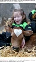 【海外発!Breaking News】見事なハート模様を持つ子牛がバレンタインデーに誕生(北アイルランド)