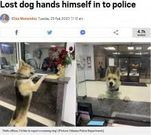 「警察犬に志願?」「迷子?」夜中に警察署のカウンターにやってきた犬(米)