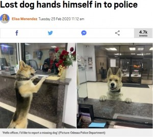 【海外発!Breaking News】「警察犬に志願?」「迷子?」夜中に警察署のカウンターにやってきた犬(米)