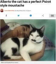 【海外発!Breaking News】まるでチャップリン 見事なちょび髭を持つネコ(メキシコ)