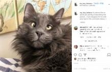 【海外発!Breaking News】寄り目の猫がSNSで大人気 飼い主はグッズ販売の売上げを動物保護施設へ寄付(米)<動画あり>