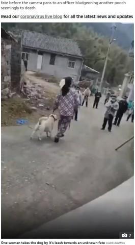 【海外発!Breaking News】新型コロナウイルスの拡散防止を理由に、中国で村中の犬が撲殺