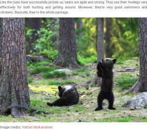 遊んでいる子グマたち(画像は『Bored Panda 2020年2月15日付「Teacher Stumbles Upon Baby Bears 'Dancing' In Finland Forest, Thinks He's Imagining It」(Image credits: Valtteri Mulkahainen)』のスクリーンショット)