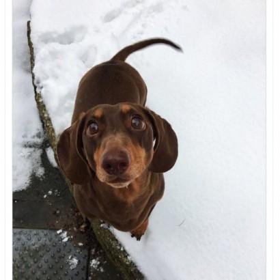 【海外発!Breaking News】自宅待機する家族と一緒に過ごせる嬉しさから、犬が尻尾の振りすぎで捻挫(英)