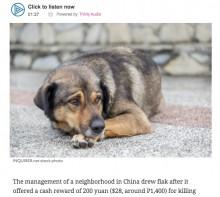 【海外発!Breaking News】中国の自治体「野良犬を殺した人は1頭につき3千円以上の報酬」と通達し物議