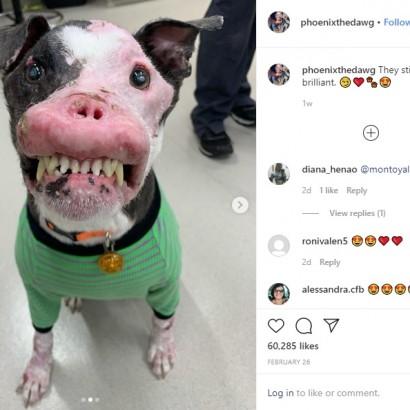 【海外発!Breaking News】「醜い」と捨てられた? 自己免疫疾患を患う犬、保護されて幸せを掴む(米)<動画あり>